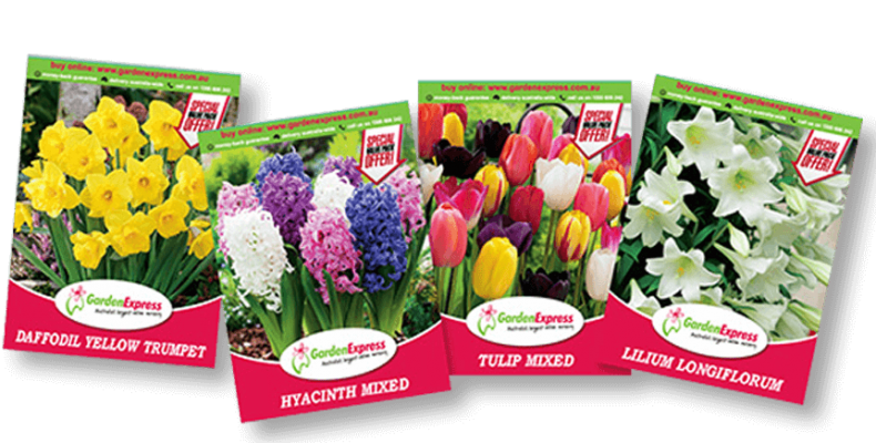 package b e1537240887411 790x400 Photos for Your Plant Tags   Floramedia