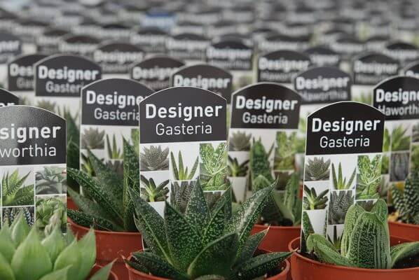 1 2 598x400 Examples of Useful Information You Can Include on Plant Labels and Tags