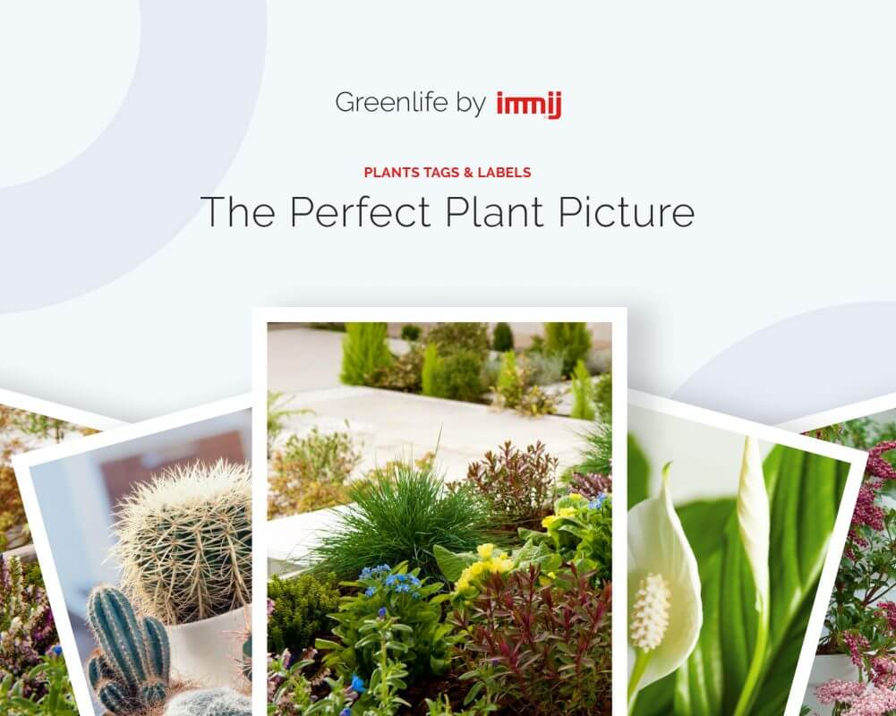 The Perfect Plant Picture