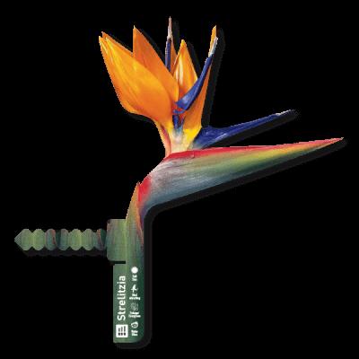 dc3 400x400 Dans Plants   Bird of Paradise Label