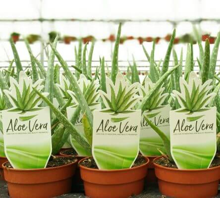 av 444x400 Plant Labels for Nursery Wholesalers