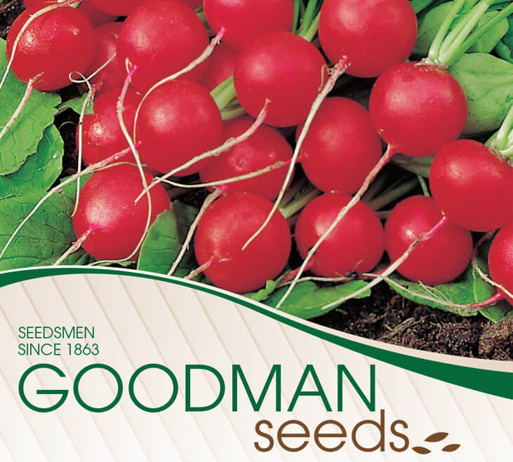 gs cs b Goodman Seeds