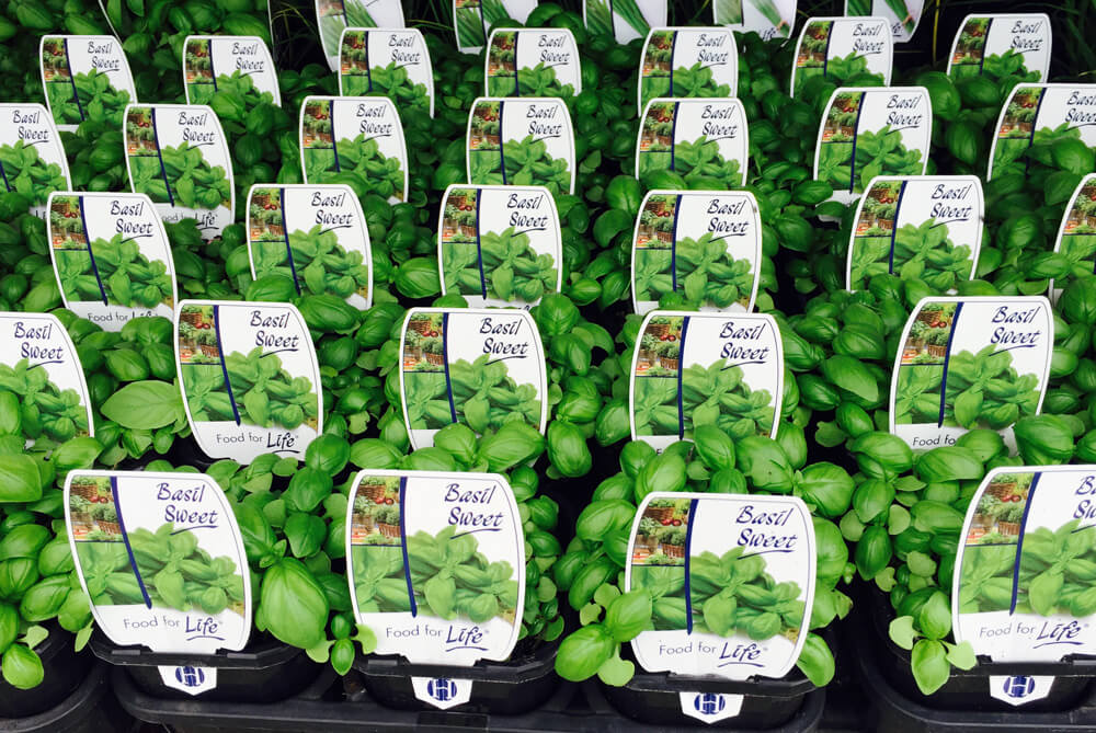 Hn3 598x400 Plant Labels For Nursery Wholers