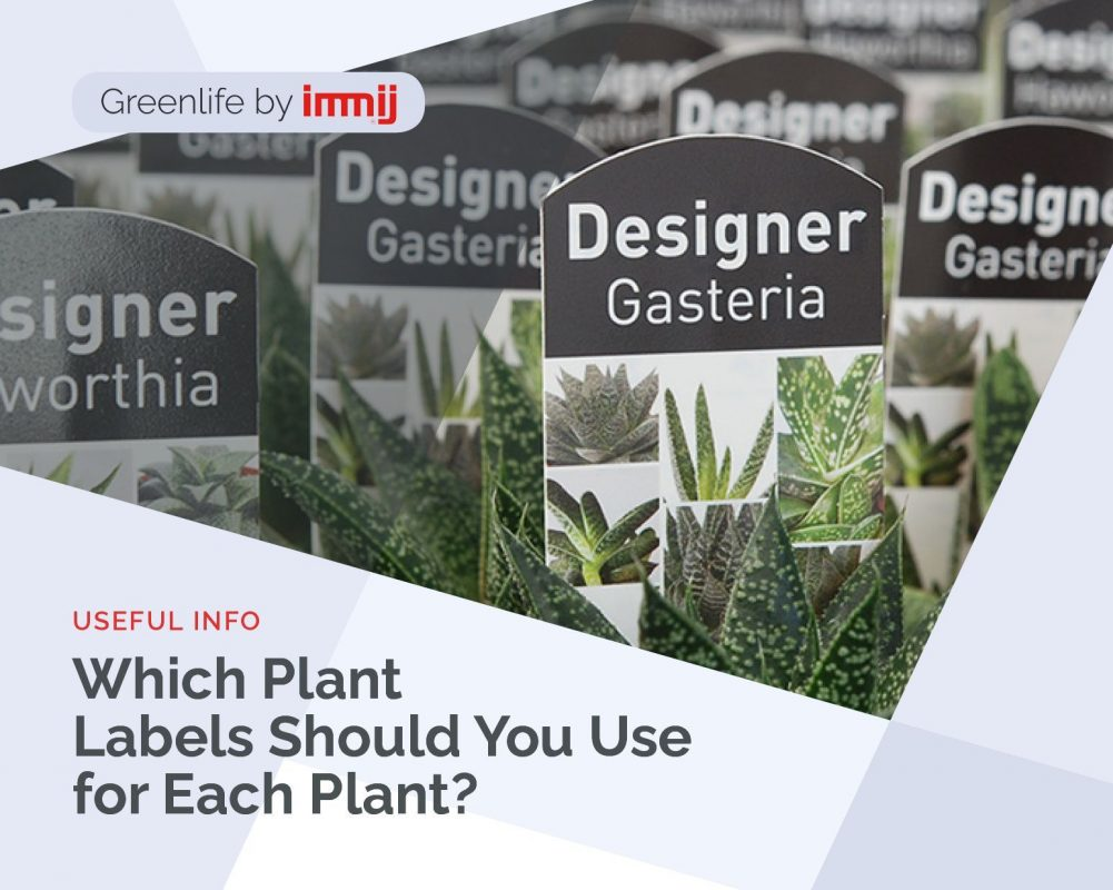 Which Plant Labels Should You Use for Each Plant?