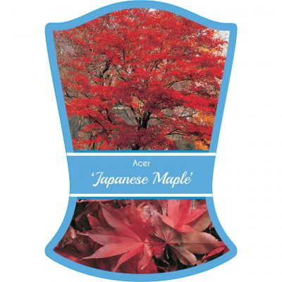 acer japanese maple 400x400 Why Greenlife by Immij Delivers The Best Plant Label Photos for Your Plant Tags