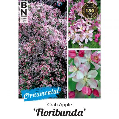 crab apple floribunda 400x400 Everything You Need to Know about Greenlife by Immij Plant Labels