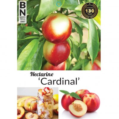 nectarine cardinal 400x400 Plant Tags with the Greenlife by Immij Difference