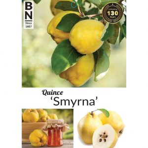 quince smyrna 300x300 Greenlife by Immij