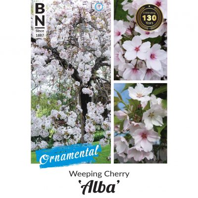 weeping cherry alba 400x400 Why Greenlife by Immij Delivers The Best Plant Label Photos for Your Plant Tags