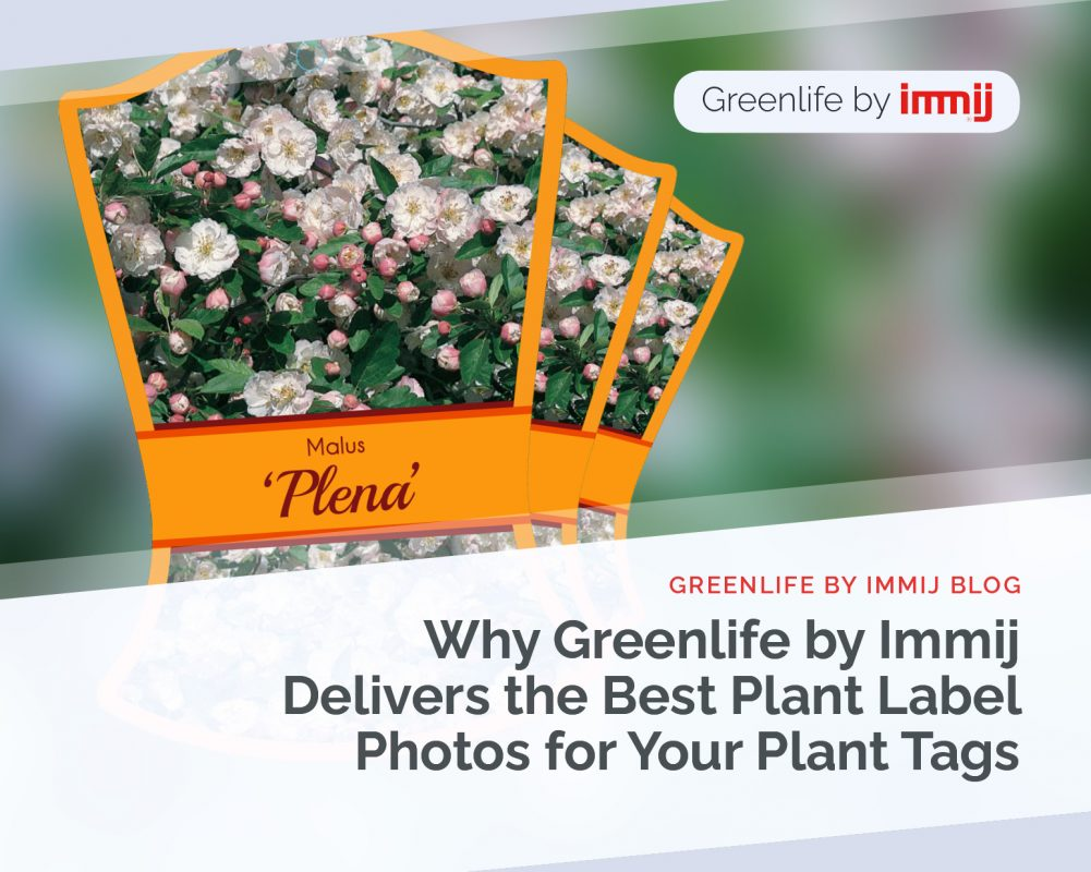 Why Greenlife by Immij Delivers The Best Plant Label Photos for Your Plant Tags