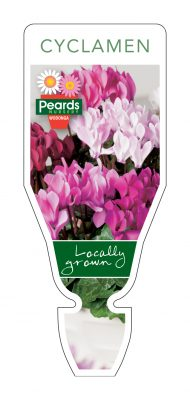PRD131 190x400 The Seasonal Plant Tags Your Wholesale Nursery Needs for 2019