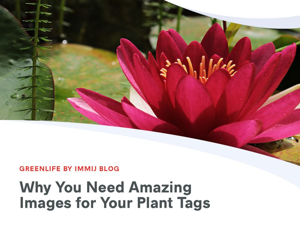 Why You Need Amazing Images for Your Plant Tags