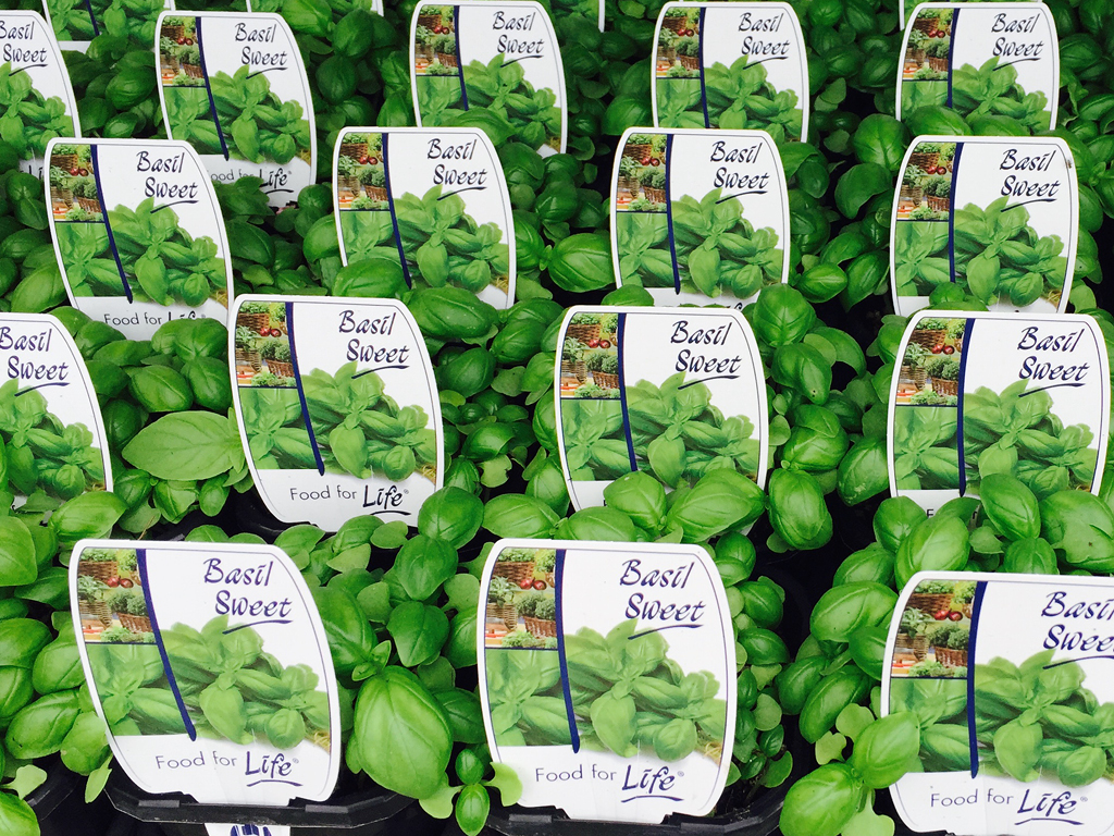 greenlife labels 4x3 5 Plant Tags