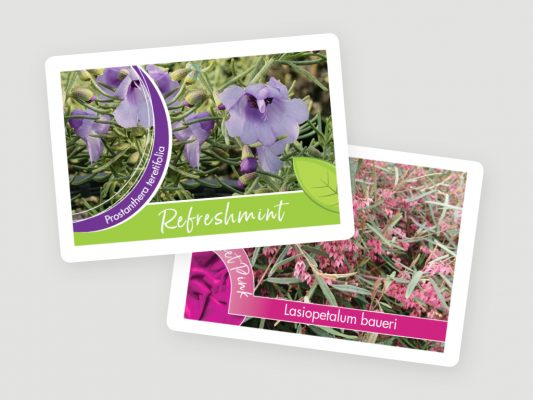 greenlife tags 4x3 4 533x400 5 Tips for Amazing Holiday Plant Tags and Plant Labels