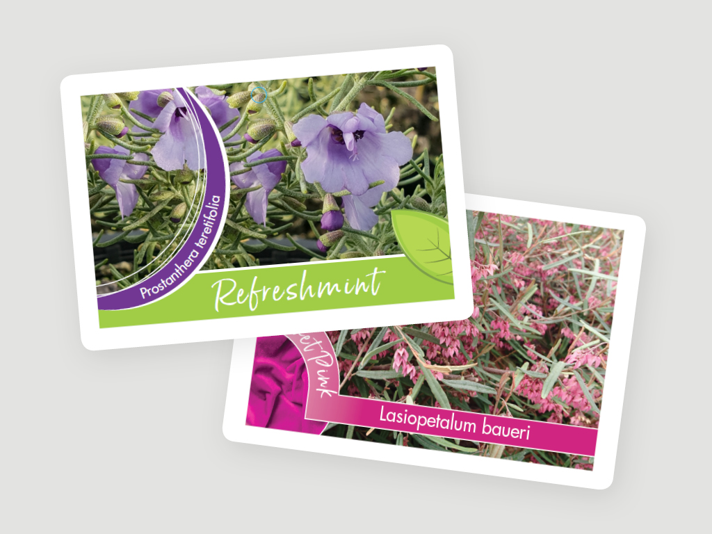 greenlife tags 4x3 4 Plant Labels