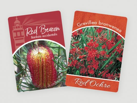 greenlife tags 4x3 6 1 533x400 5 Tips for Amazing Holiday Plant Tags and Plant Labels