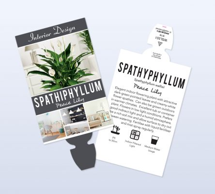 grenlife page featured image spathiphyllum x2 res 444x400 5 Factors That Affect a Plant Tags Longevity
